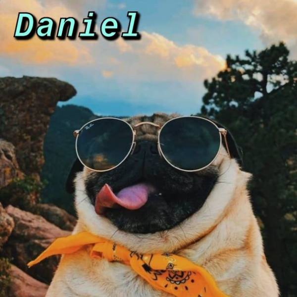 What Dog You Are Based On Your Name