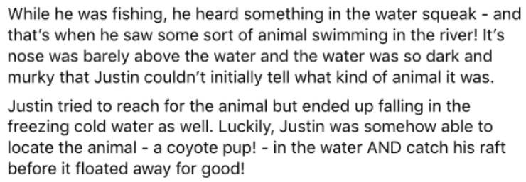 Canadian Kayaker Saves A Coyote Pup While On A Trip