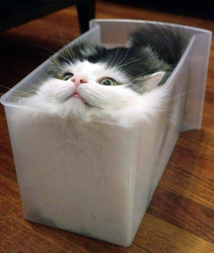Cats Just Fit… Everywhere…