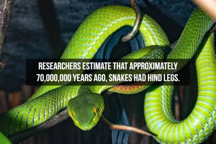Slithering Facts About Snakes