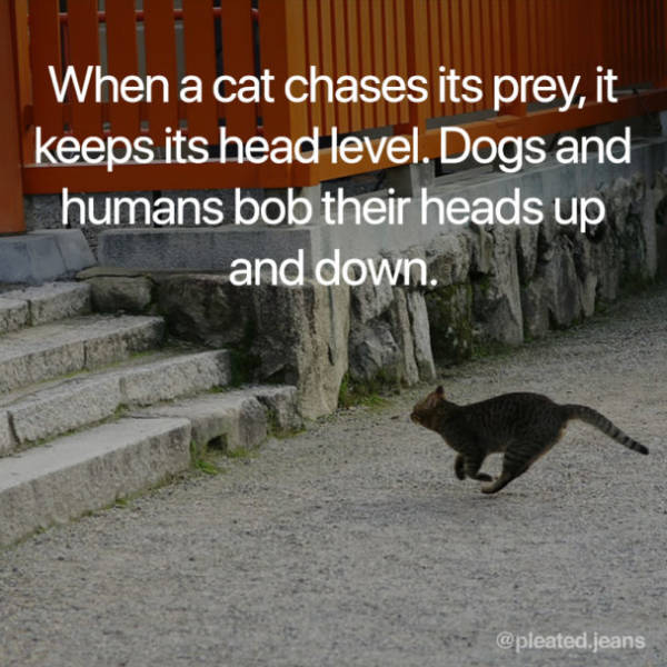 Cats Are Interesting!