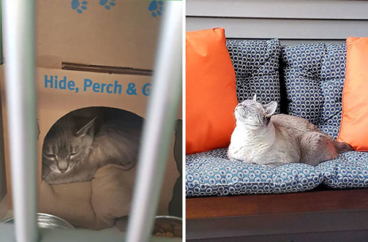 Here's Some More Awesome Rescued Pets!
