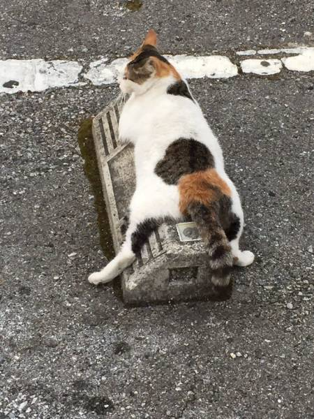Cats Love Parking Bumpers!