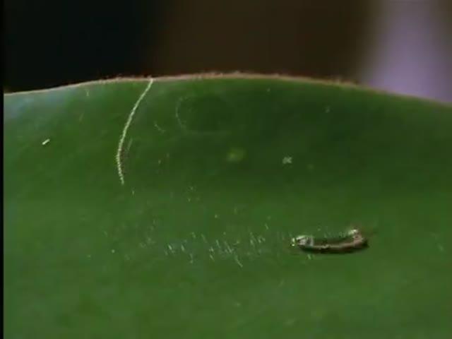 That's A Smart Caterpillar!