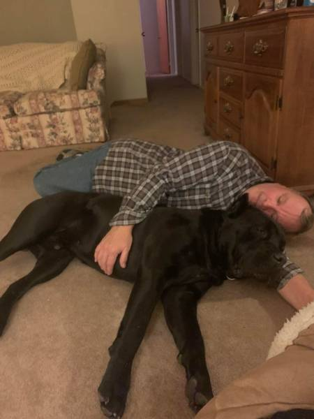 """Dads Who Lost Their Battles Against """"Unwanted"""" Pets"""