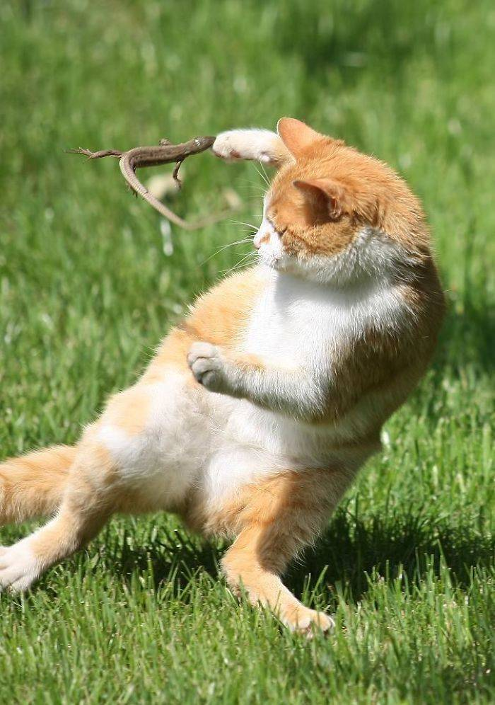 """Cats And Lizards Love """"Playing"""" Together!"""