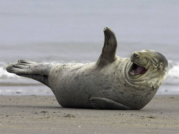 Seals Just Can't Stop Laughing!