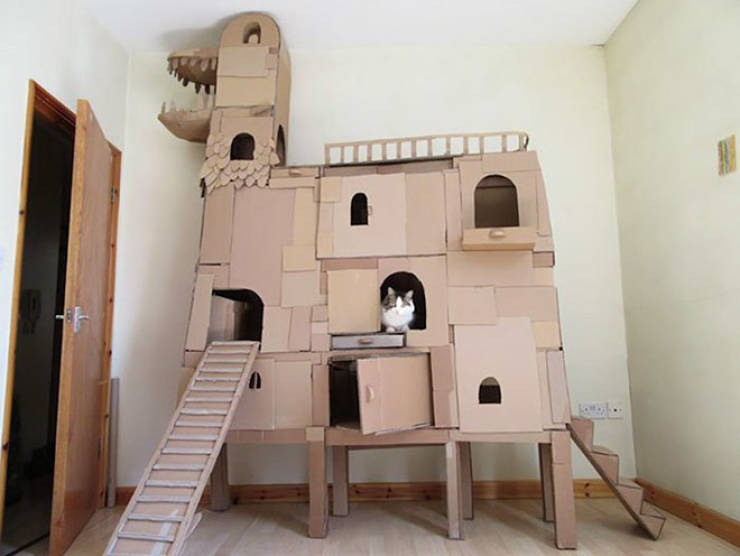 These Cats Get Their Own Cardboard Forts!