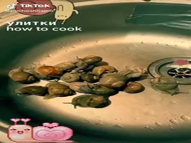 How To Cook Snails. Last Shot Is The Most Important One