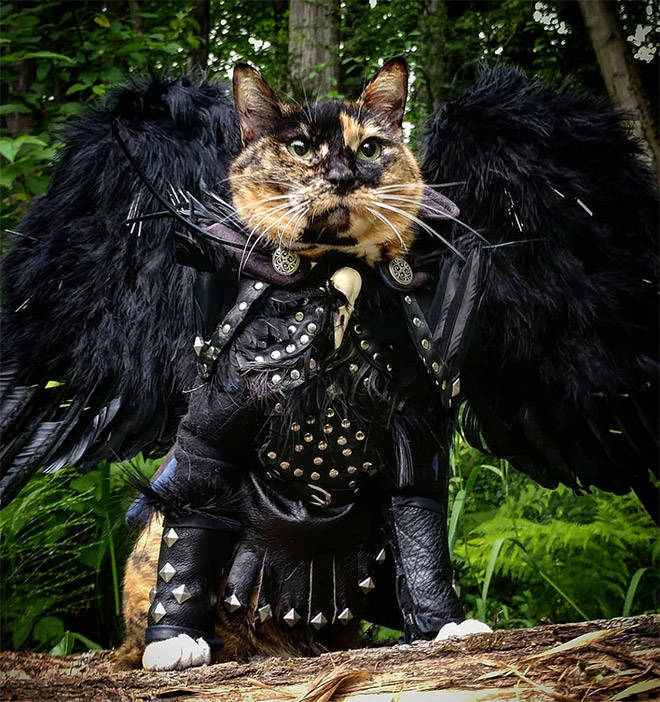 Every Cat Secretly Has A Set Of Battle Armor!
