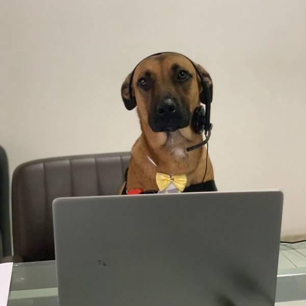 Stray Dog Gets A Job At A Car Dealership