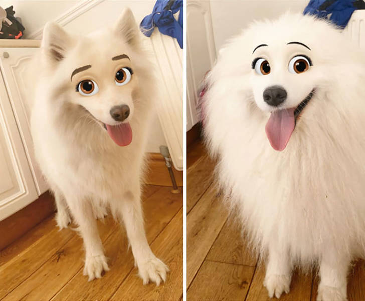 Snapchat Can Now Turn Your Dog Into A Disney Character!