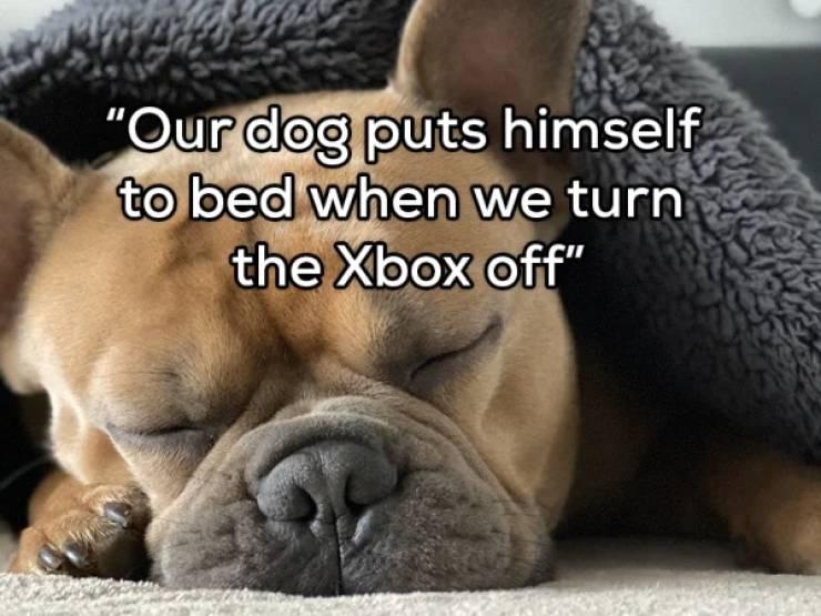 Accidental Pet Training Is Still Training…