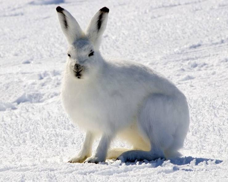 Animals Are Infinitely Fascinating!