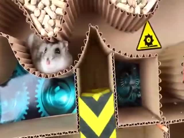Hamster Obstacle Course
