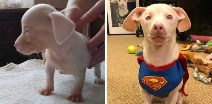 Adorable Animals Before And After Adoption