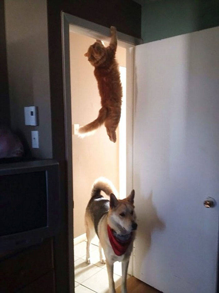 Laws Of Physics Are Nothing For These Cats