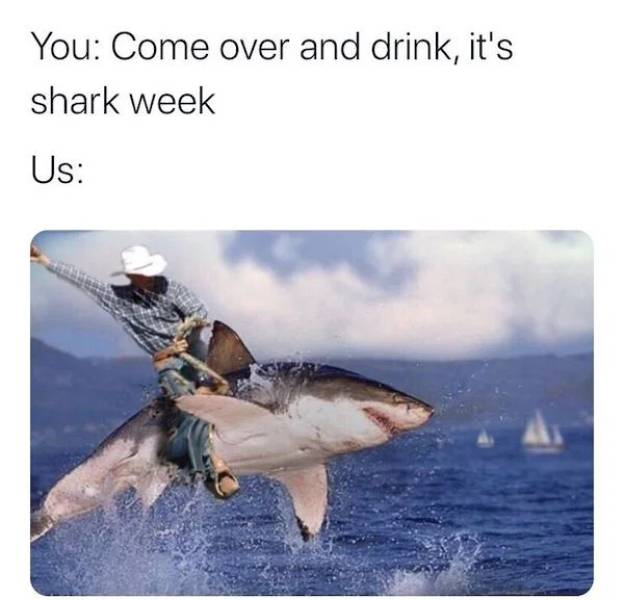 Take A Bite Out Of These Shark Week Memes