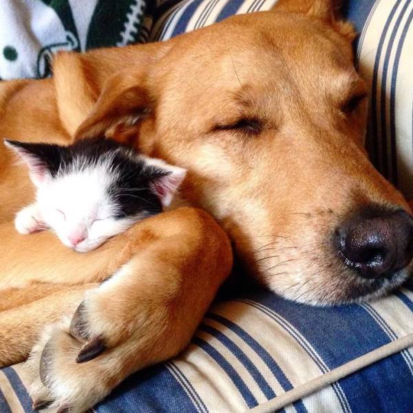 Animals Know How To Be Friends With Each Other