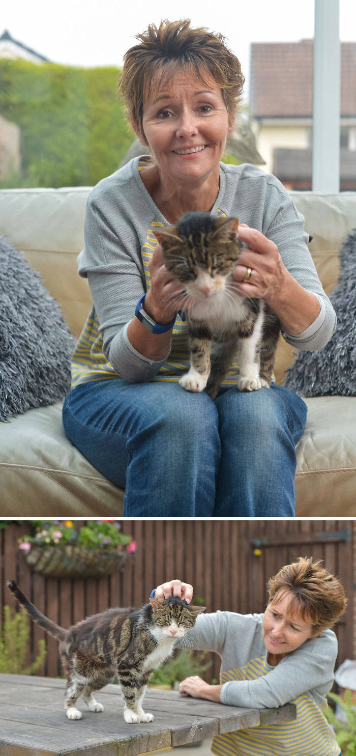 Stories About Missing Cats Being Found After A Long Time