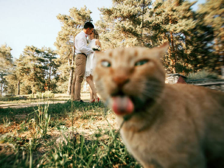 Cats Are The Masters Of Photobombing!