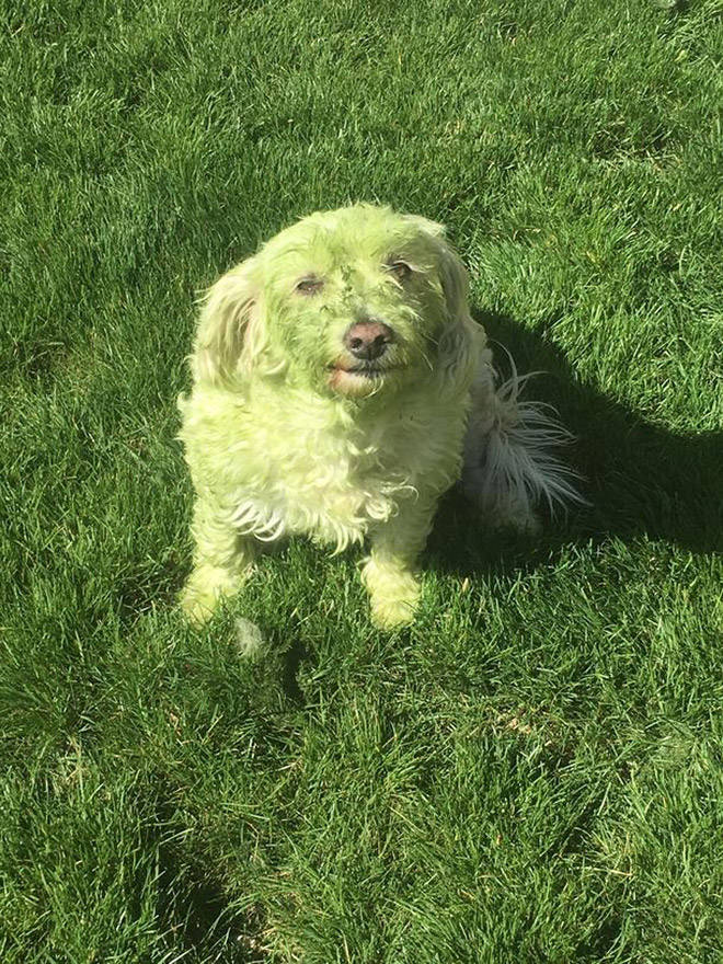 Don't Let Your Dogs Play In Freshly Cut Grass…
