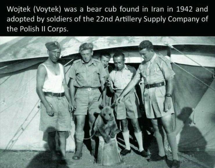 This Is Wojtek, The Bear Who Served In Polish Army Back In World War II