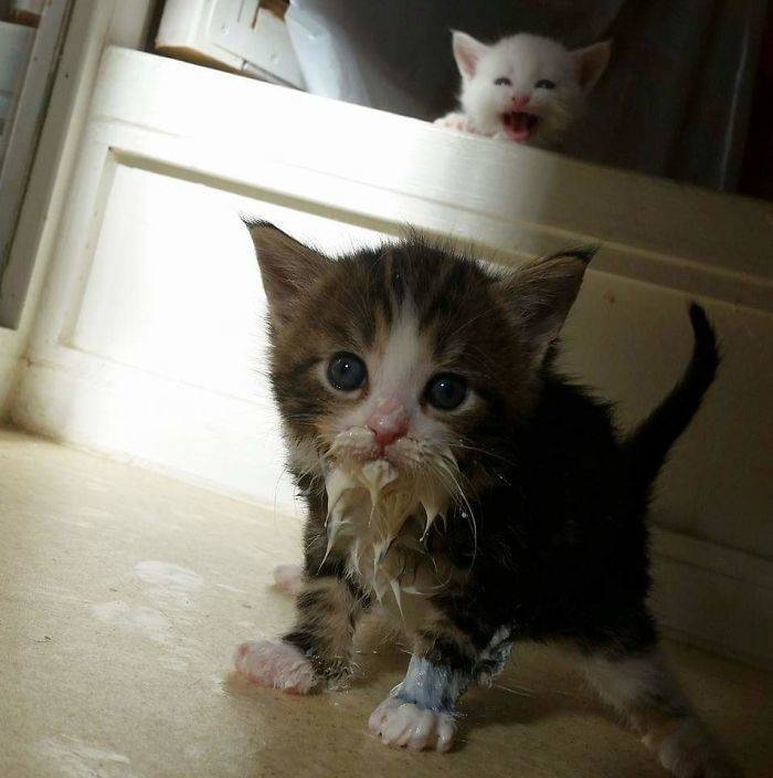 Cats Just Can't Eat Without Making A Mess…