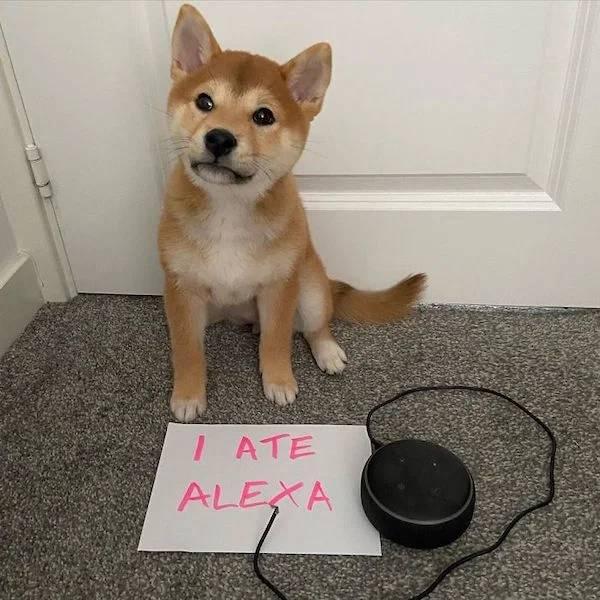 Pets Have No Shame