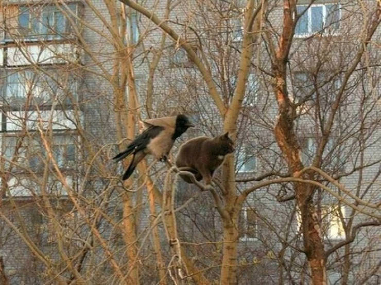 Cats Who Think They Are Birds…