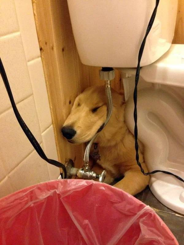 Dogs Don't Care, They Can Sleep Anywhere!