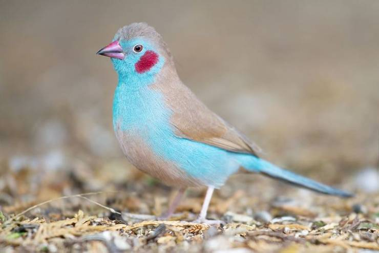 Have You Seen These Enigmatic Exotic Birds?