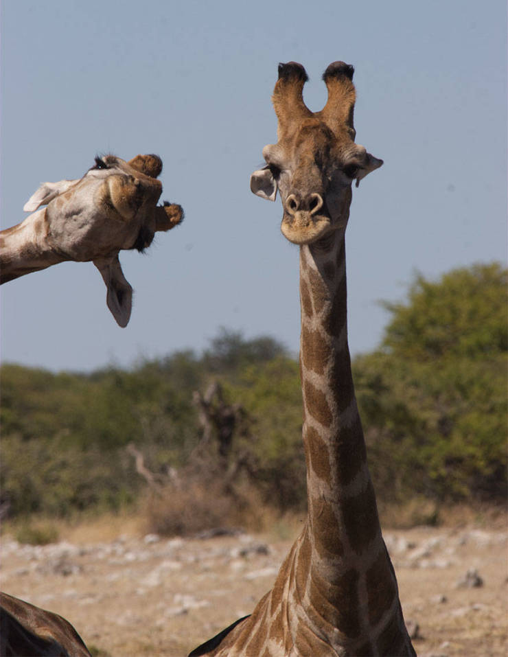Finalists Of The 2020 Comedy Wildlife Photography Awards Show How Funny Nature Really Is