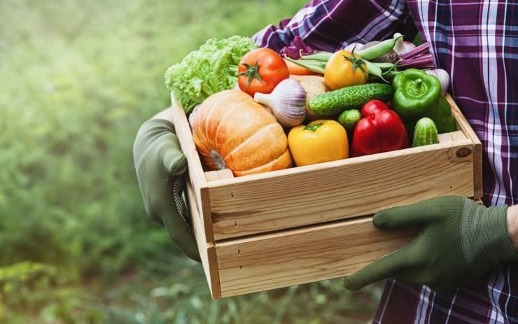 Tips to Grow Your Food Company