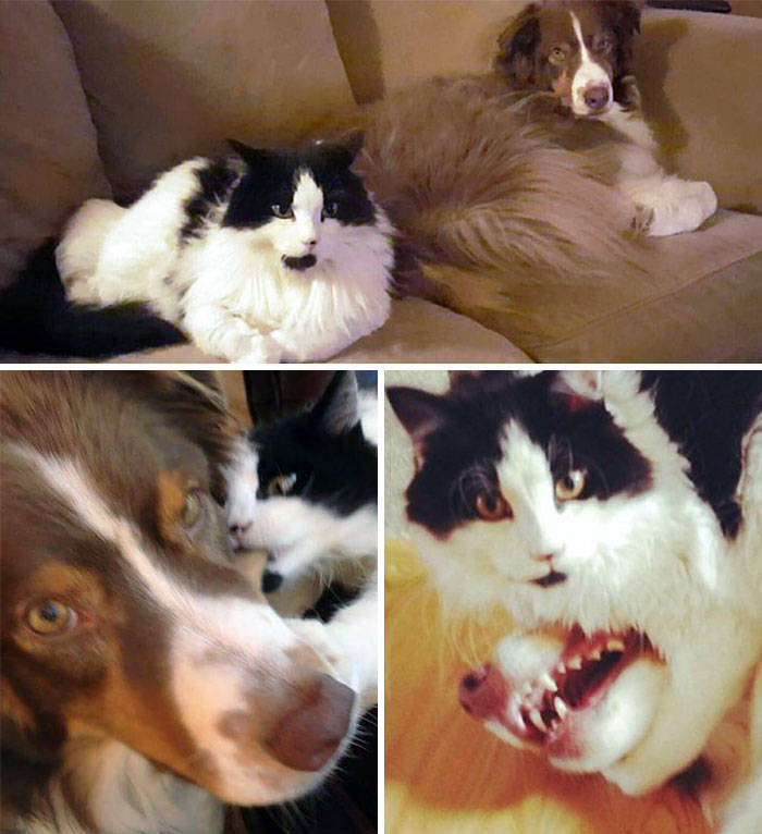 Cats Don't Always Like Dogs…