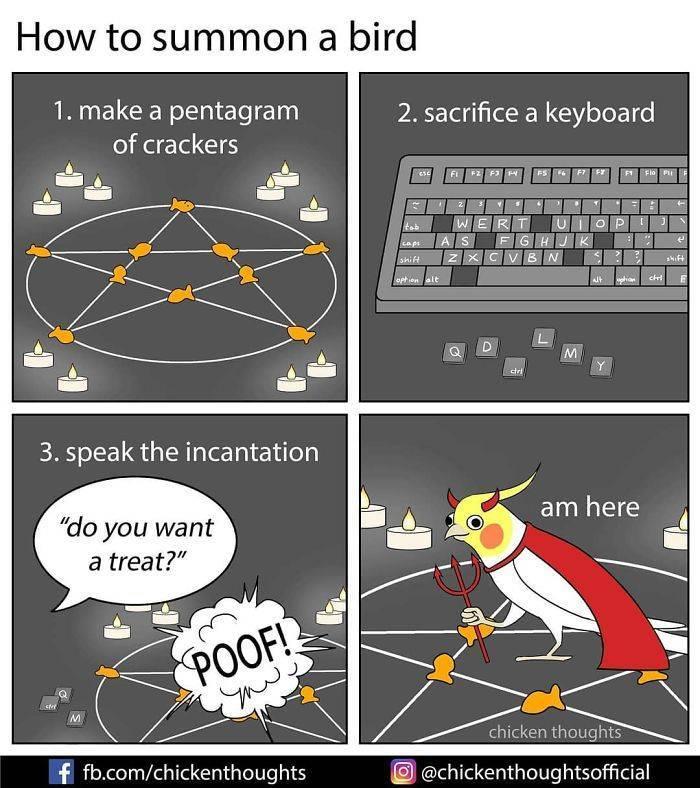 These Comics Show The Hidden Life Of Birds