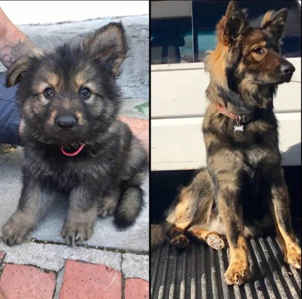 How Time Changes Our Dogs