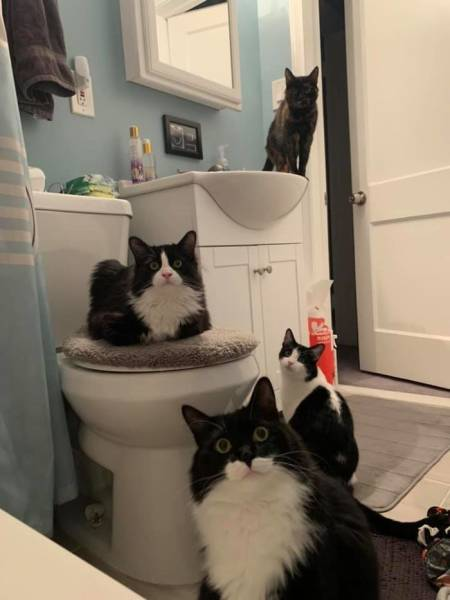 Cats Don't Care About Your Privacy