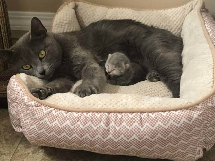 Best Pet Adoption Stories Of September