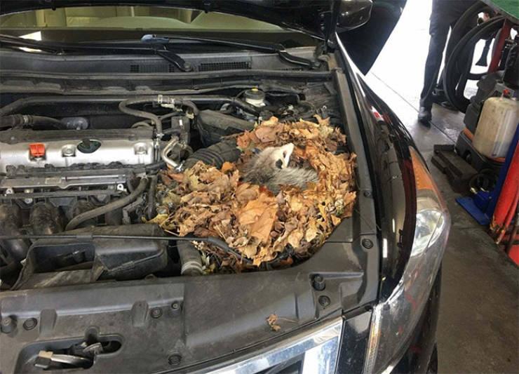 Car Mechanics See All Sorts Of Crazy Stuff…