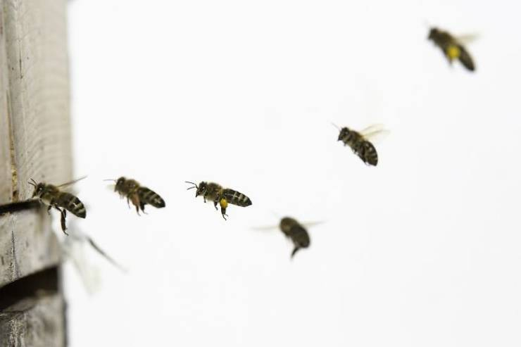 Good News! World's Honey Bee Population Is Growing!