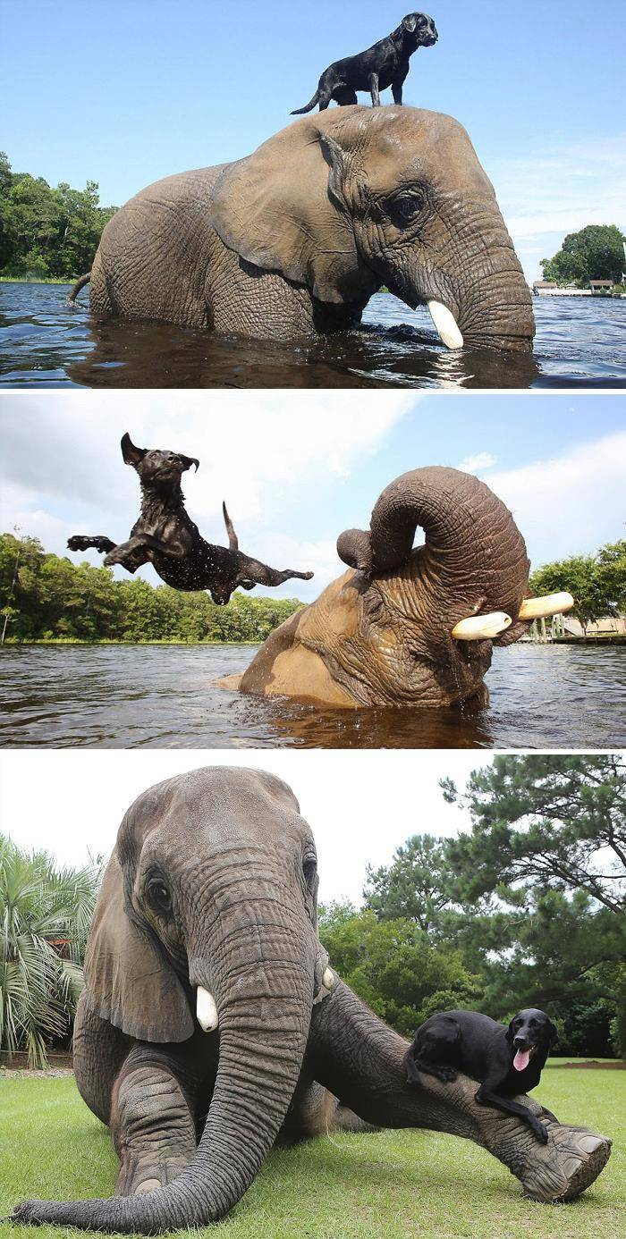 Animals Know Everything About Friendship