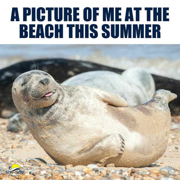 """A fur seal enjoys a sunbath with his tongue out. The picture says:"""" A picture of me at the beach this summer"""