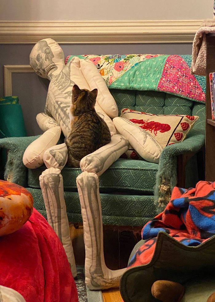 How Cats React To A Human Skeleton Pillow
