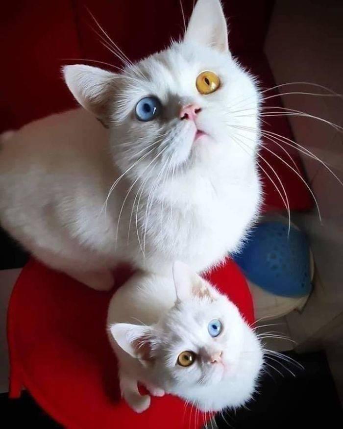 Cats Go Derp