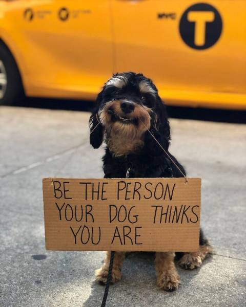 This Dog With Sign Has A Message For You