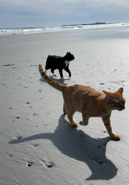 """This Cat """"Enjoyed"""" His First Beach Experience Quite A Lot!"""