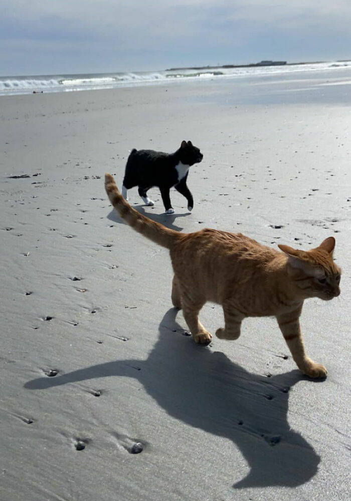 "This Cat ""Enjoyed"" His First Beach Experience Quite A Lot!"