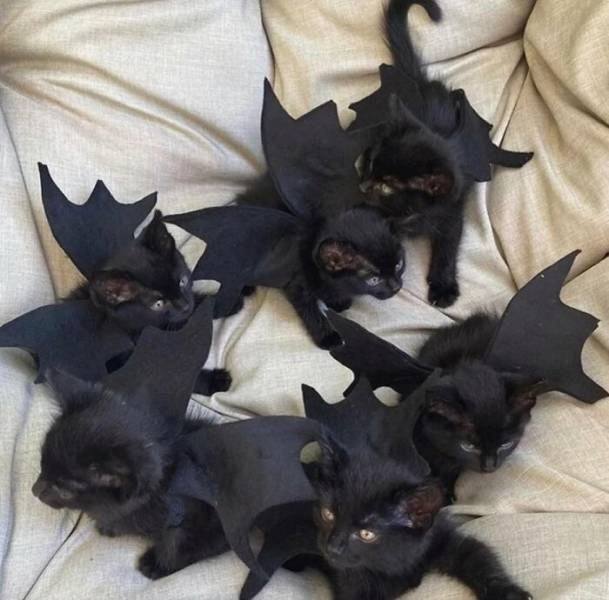 Even Pets Celebrated Halloween In Style!