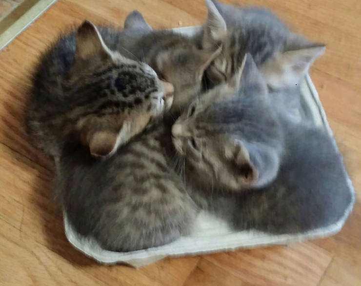 Cats Are Very Specific When It Comes To Choosing Where To Sleep…